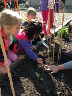 Ladybug Garden Program