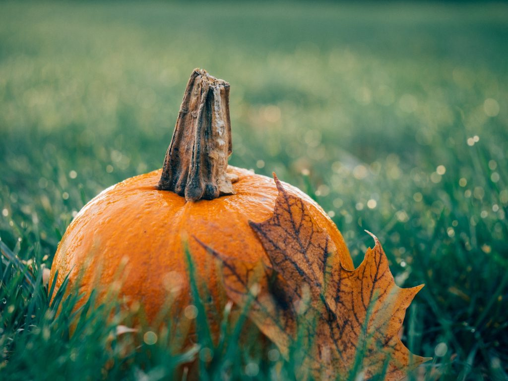 Picture of a pumpkin and a leaf in autumn.