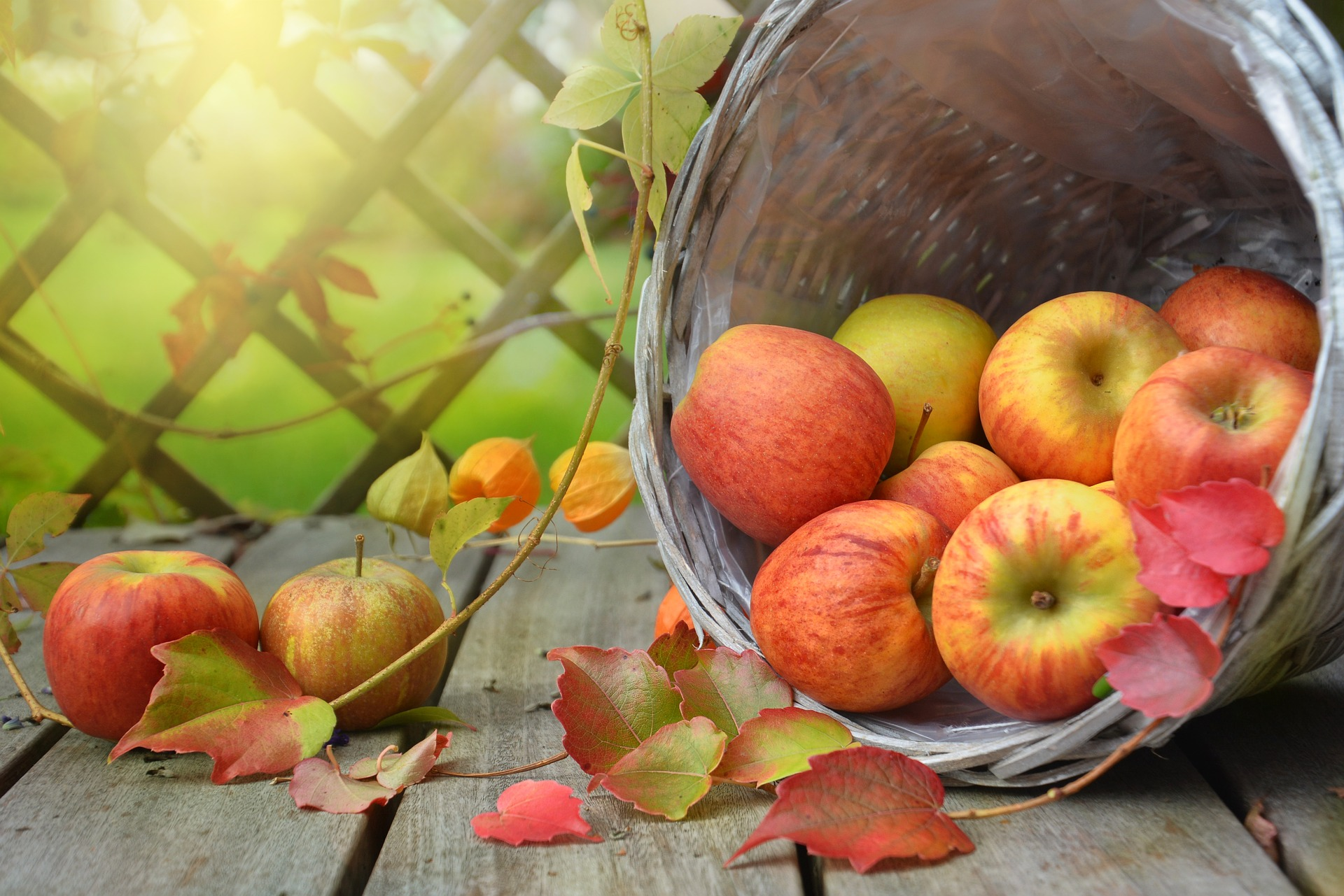 Apples in a bucket on a deck with autumn leaves surrounding them.